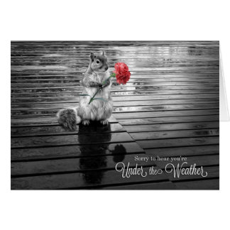 Get Well Squirrel with Carnation Black and White Card