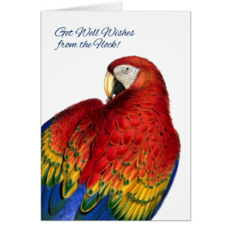 Get Well Wishes from Group Rainbow Macaw Parrot Card