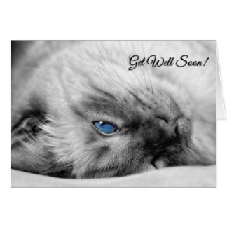 Get Well Wishes Siamese Cat Card