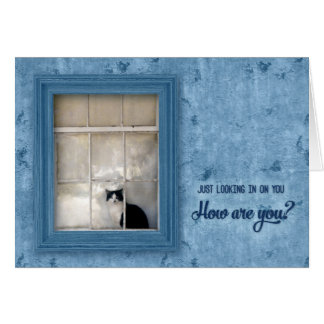 Get Well with Black and White Cat on a Window Sill Card