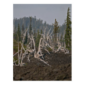 Ghost Forest in Lava, Old McKenzie Hwy Postcard