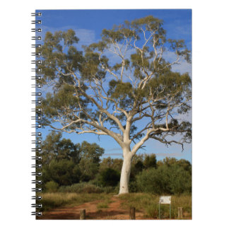 Ghost gum tree, Outback Australia Notebooks