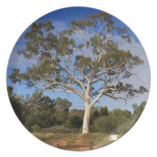 Ghost gum tree, Outback Australia Plates