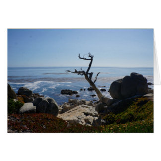 Ghost Tree - Scenic 17 Mile Drive Greeting Card