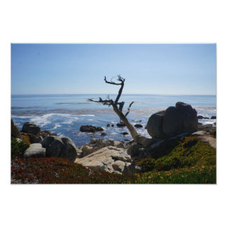 Ghost Tree - Scenic 17 Mile Drive Photo Print