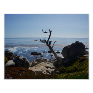 Ghost Tree - Scenic 17 Mile Drive Poster
