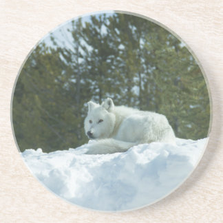 Ghost Wolf Coaster