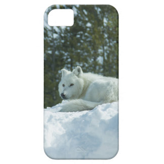 Ghost Wolf iPhone 5 Covers