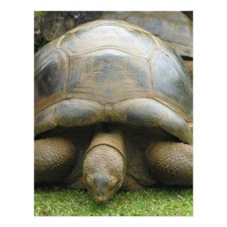Giant African Tortoise Letterhead