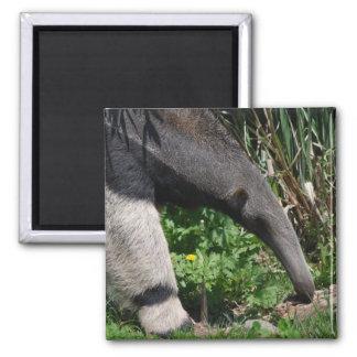 Giant Anteater Photo Magnet