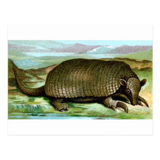 Giant Armadillo Post Card
