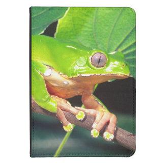 Giant Bicolor Monkey Treefrog, Phyllomedusa Kindle 4 Cover