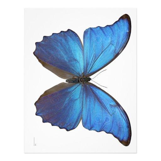 Giant Blue Morpho Butterfly Letterhead Template