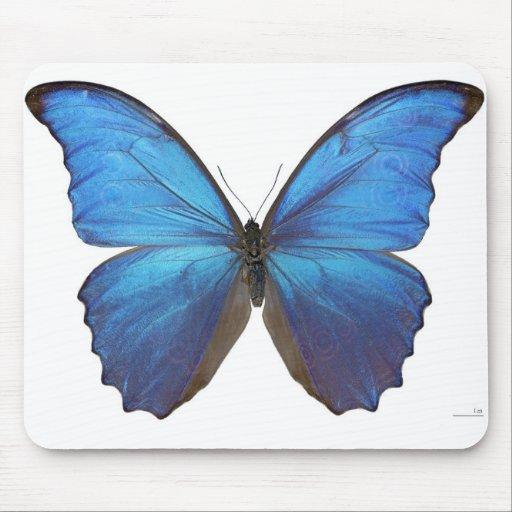 Giant Blue Morpho Butterfly Mousepad
