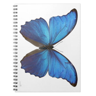 Giant Blue Morpho Butterfly Notebooks