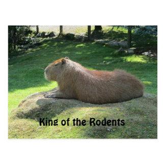 Giant Capybara Postcard