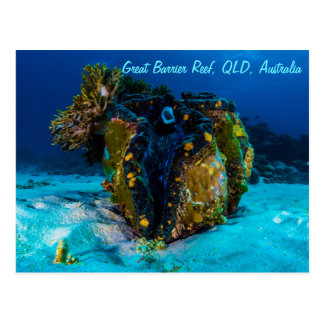 Giant Clam on the Great Barrier Reef Postcard