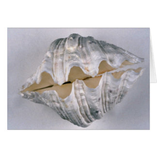 giant clam shell for decorative use card