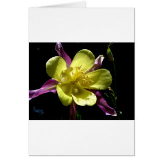Giant Columbine Card