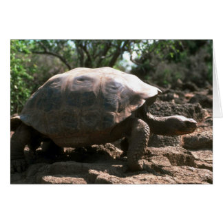Giant Dome-Shaped Tortoise Walking Card