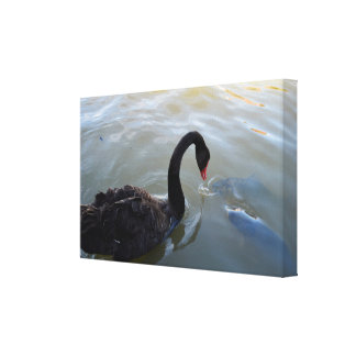 Giant Fish Trying To Attack Black Swan, Canvas Print