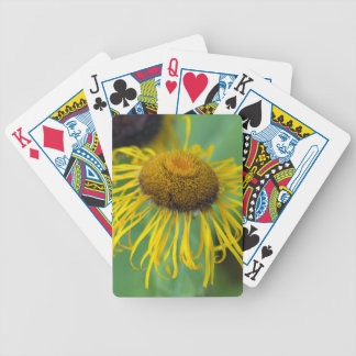 Giant Fleabane  (Inula magnifica) Bicycle Playing Cards