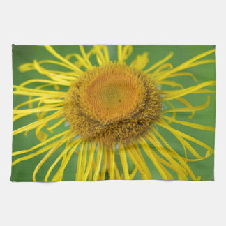 Giant Fleabane  (Inula magnifica) Kitchen Towel