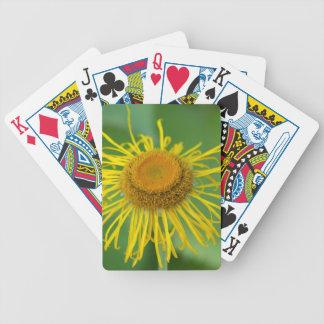 Giant Fleabane  (Inula magnifica) Poker Deck