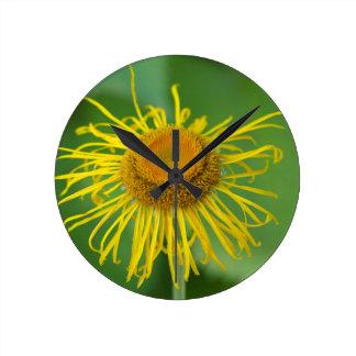 Giant Fleabane  (Inula magnifica) Round Clock