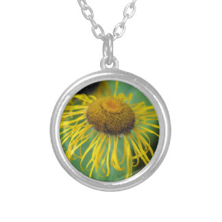 Giant Fleabane  (Inula magnifica) Silver Plated Necklace