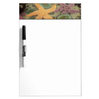Giant green anemones and ochre sea stars Dry-Erase whiteboard