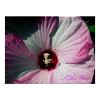 Giant Hibiscus Poster