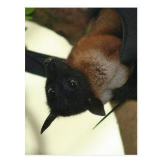 Giant Indian Fruit Bat Postcard