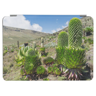 Giant Lobelia (Lobelia Deckenii) In Mount Kenya iPad Air Cover