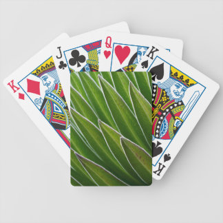 Giant Lobelia (Lobelia telekii) | Kenya, Africa Bicycle Playing Cards