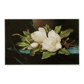 Giant Magnolias on a Blue velvet cloth, c.1890 Poster