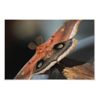 Giant Moth Photograph