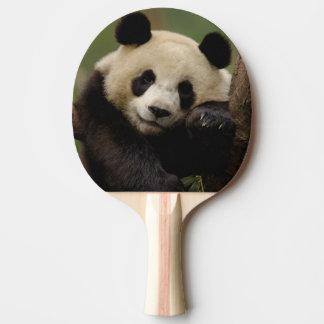 Giant panda Ailuropoda melanoleuca) Family: 4 Ping-Pong Paddle