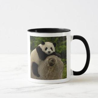 Giant panda baby Ailuropoda melanoleuca) 11 Mug