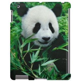 Giant Panda cub eats bamboo in the bush,