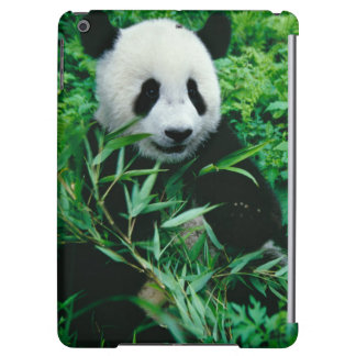 Giant Panda cub eats bamboo in the bush, Cover For iPad Air