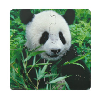 Giant Panda cub eats bamboo in the bush, Drink Coaster Puzzle