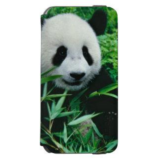 Giant Panda cub eats bamboo in the bush, Incipio Watson™ iPhone 6 Wallet Case