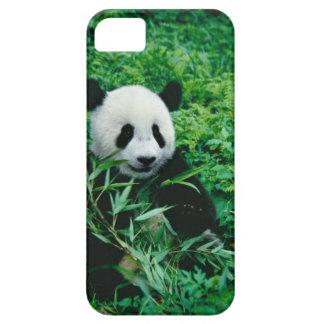 Giant Panda cub eats bamboo in the bush, iPhone 5 Covers