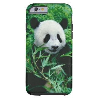 Giant Panda cub eats bamboo in the bush, Tough iPhone 6 Case