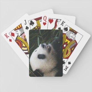 Giant Panda in Bamboo forest Playing Cards