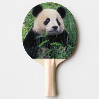Giant panda in the grass, Wolong Valley, Sichuan Ping-Pong Paddle