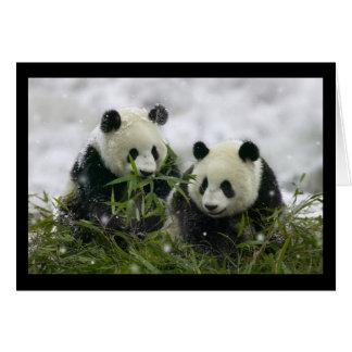 Giant Pandas Card