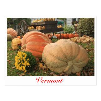 Giant Pumpkins in Vermont Postcard
