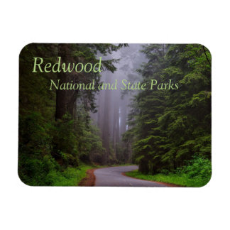 Giant Redwood Trees, Winding Road, National Park Magnet